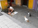 Gatti in attesa, KL